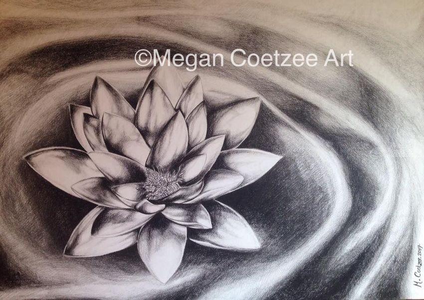 Lotus Flower Drawings Sketch By Megan Coetzee Artist Com