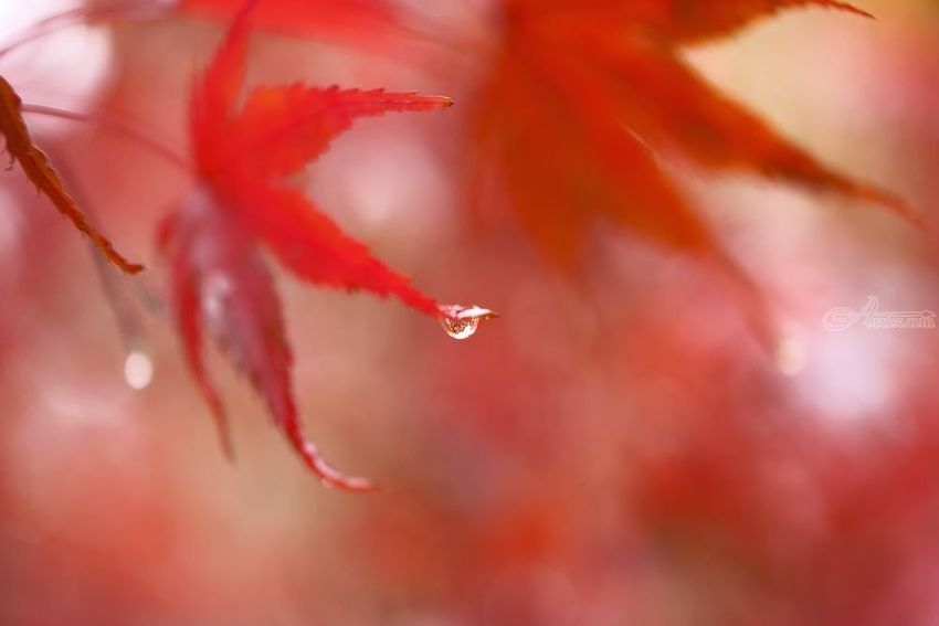 Morning Dew, Photography, Fine Art, Realism, Botanical, Digital, By Mike DeCesare