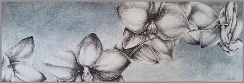 Orchids, Drawings / Sketch, Fine Art, Floral, Ink, By Megan Coetzee
