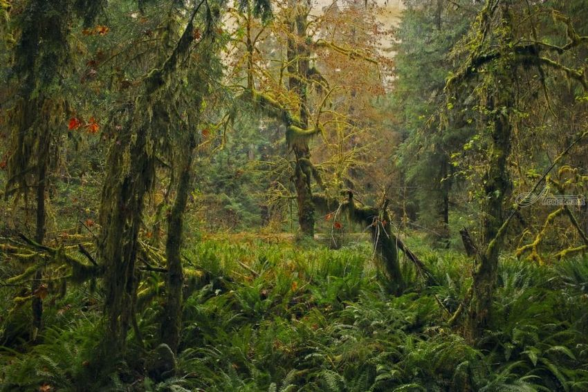 Rain Forest, Photography, Fine Art, Realism, Landscape, Digital, By Mike DeCesare