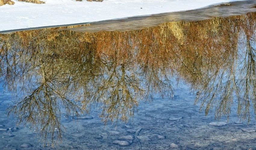 Reflection, Photography, Fine Art, Nature, Photography: Premium Print, By Jim Stewart