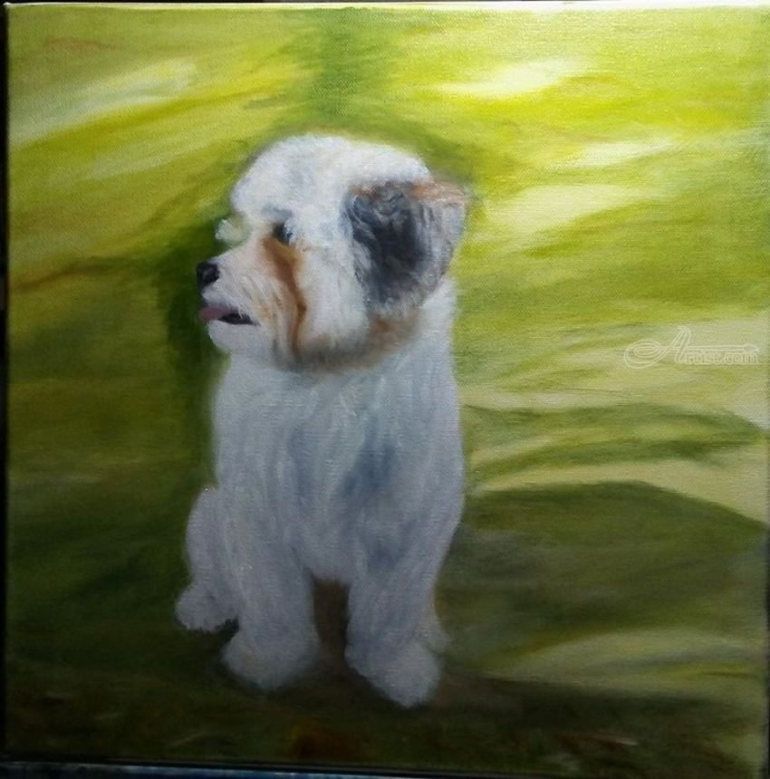 Shih tzu Dog Benji, Paintings, Fine Art, Realism, Portrait, Canvas, Oil, By Mike Chaple