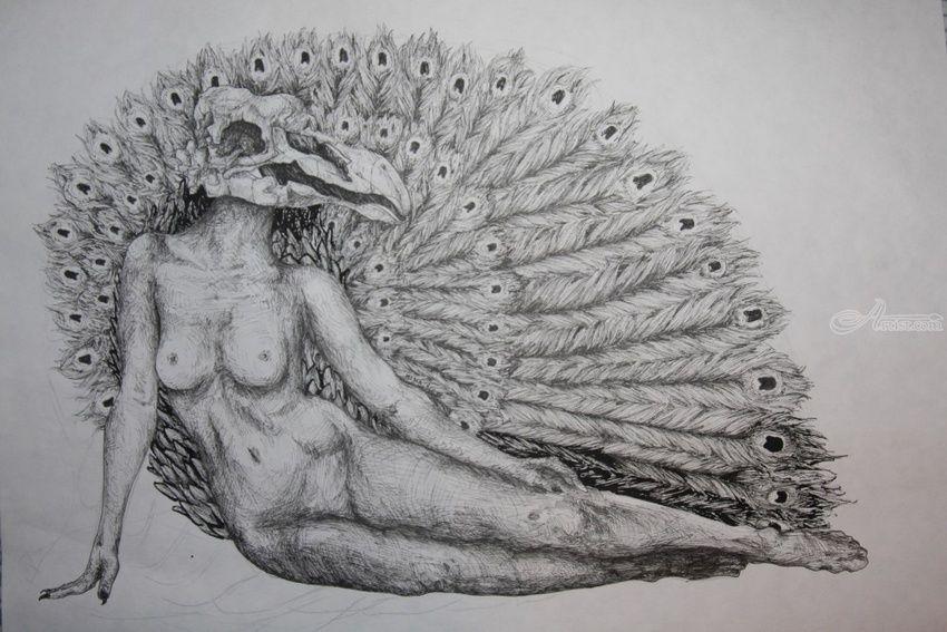 Line Art Animals Tattoo : The peacock decorative arts drawings sketch illustration
