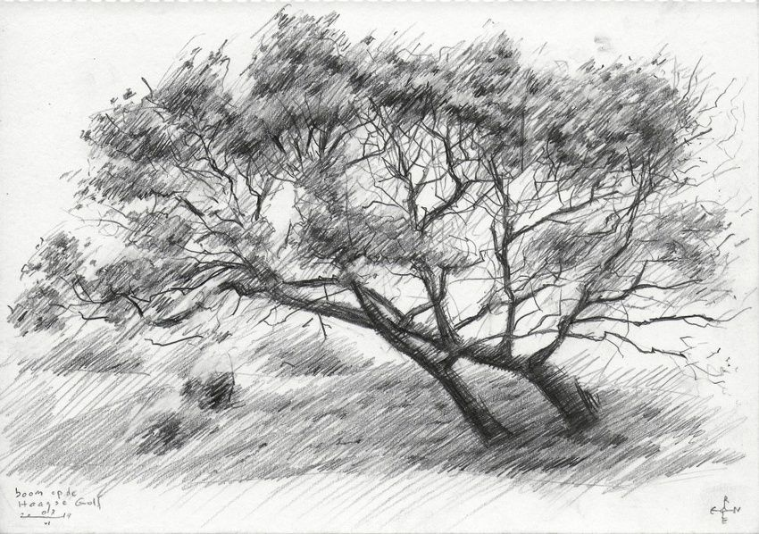 Tree at The Hague Golf 1 - 03-06-14, Drawings / Sketch, Abstract,Fine Art,Impressionism,Realism, Composition,Figurative,Landscape,Nature, Pencil, By Corne Akkers