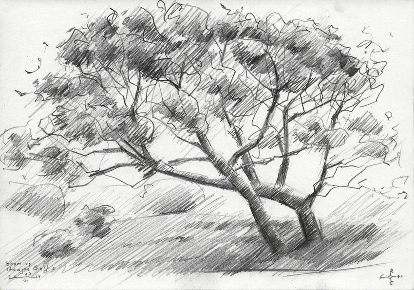 Tree at The Hague Golf 2 - 03-06-14, Drawings / Sketch, Abstract,Cubism,Fine Art,Impressionism,Realism, Composition,Figurative,Inspirational,Landscape,Nature, Pencil, By Corne Akkers
