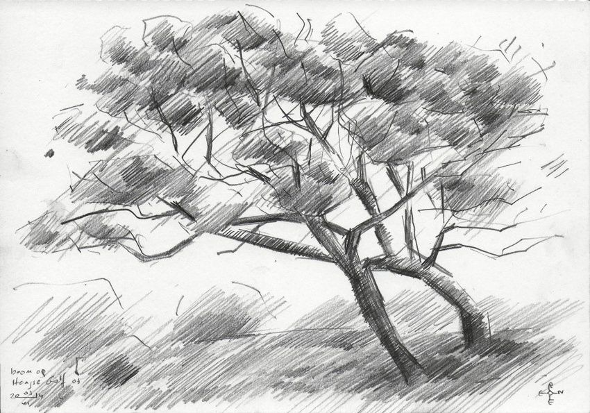 Tree at The Hague Golf 3 - 03-06-14, Drawings / Sketch, Abstract,Cubism,Fine Art,Impressionism, Composition,Figurative,Landscape,Nature, Pencil, By Corne Akkers