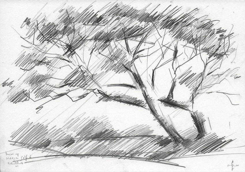 Tree at The Hague Golf 6 - 03-06-14, Drawings / Sketch, Abstract,Cubism,Fine Art,Impressionism,Realism, Composition,Figurative,Inspirational,Landscape,Nature, Pencil, By Corne Akkers