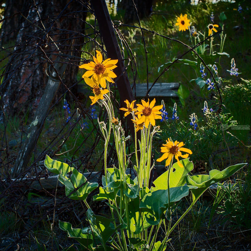 Wildflower Morning, Photography, Photorealism, Botanical, Floral, Photography: Premium Print, By Mike DeCesare
