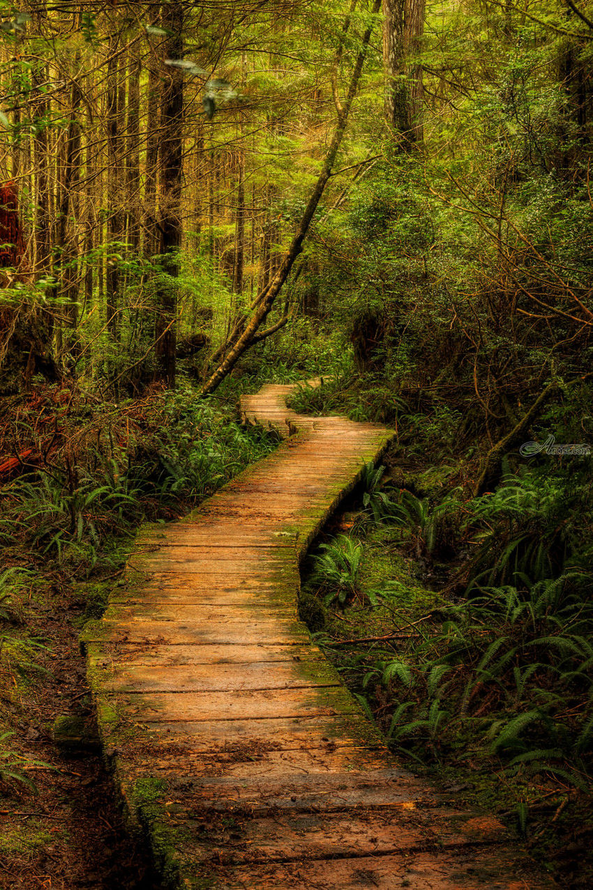 Wood Plank Trail, Photography, Photorealism, Landscape, Photography: Premium Print, By Mike DeCesare