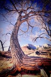"""Cottonwood"" Limited Edition, Photography, Fine Art, Landscape, Acrylic,Photography: Premium Print, By Chris Kay"