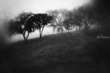 """Fog"" Limited Edition, Photography, Fine Art, Landscape, Acrylic,Photography: Premium Print, By Chris Kay"