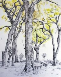 Tree Blossoms, Drawings / Sketch, Abstract, Botanical, Ink, By Ambereen Ahmed