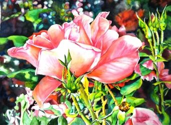 Fiesta Rose, Paintings, Realism, Nature, Watercolor, By Barbara Clay