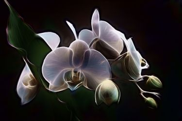 Luminous Orchid, Photography, Fine Art, Botanical, Photography: Photographic Print, By Erin Carr