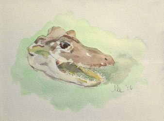 Alligator (Alligator<br>mississippiensis), Paintings, Fine Art, Animals, Watercolor, By Marc Clamage