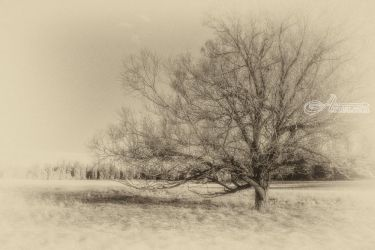 Alone, Photography, Photorealism, Landscape, Photography: Photographic Print, By Mike DeCesare