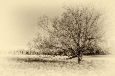 Alone, Photography, Photorealism, Landscape, Photography: Premium Print, By Mike DeCesare