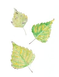 Birch leaves, Paintings, Realism, Botanical, Watercolor, By Ira Samoilina