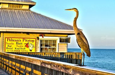 Bird on a pier, Digital Art / Computer Art,Photography, Fine Art, Animals,Daily Life,Environmental art,Nature,Seascape,Tropical,Wildlife,Window on the World, Digital, By Timothy Lowry