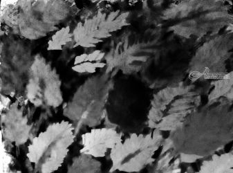 Black And White: Leaves of<br>Fall., Paintings, Impressionism, Still Life, Digital,Watercolor, By Catherine Bayani