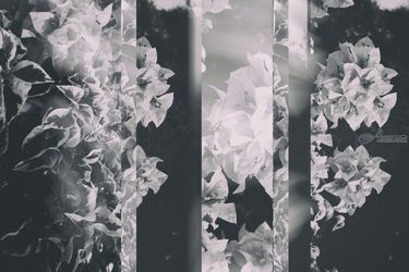 Bougainvillea Collage B&W, Collage,Photography, Minimalism,Sensationalism, Botanical,Composition,Decorative,Floral,Nature, Photography: Metal Print,Photography: Photographic Print,Photography: Premium Print,Photography: Stretched Canvas Print, By Ira Silence
