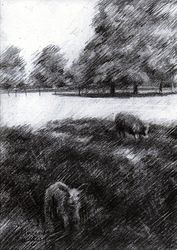 Clingendael – 25-04-19, Drawings / Sketch, Fine Art,Impressionism,Realism, Animals,Composition,Figurative,Inspirational,Landscape, Pencil, By Corne Akkers