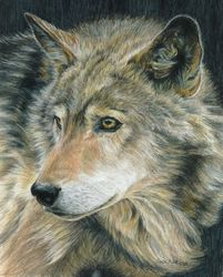 Curious Eyes, Drawings / Sketch,Paintings, Photorealism,Realism, Animals,Nature,Wildlife, Painting, By Carla Kurt