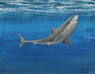Daddy Shark, Paintings, Fine Art, Animals, Acrylic, By Kelsey VandenHoek