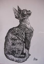 Devon Rex, Decorative Arts,Drawings / Sketch,Illustration, Commercial Design,Fine Art,Realism,Surrealism,Symbolism, Anatomy,Animals,Composition,Conceptual,Spiritual,Still Life, Ink, By Misia Slemp