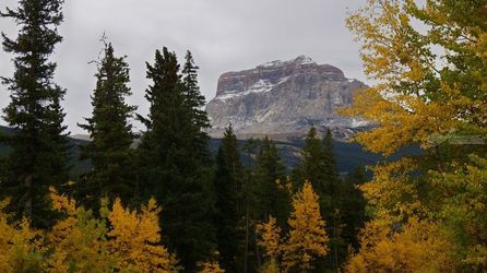 Fall Colors at Chief Mountain,<br>Northside, Photography,Poster, Fine Art,Photorealism,Realism,Romanticism, Botanical,Decorative,Environmental art,Landscape,Nature, Photography: Metal Print,Photography: Photographic Print,Photography: Premium Print,Photography: Stretched Canvas Print, By Tracey Vivar