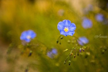Feeling Blue, Photography, Photorealism, Floral, Photography: Premium Print, By Mike DeCesare