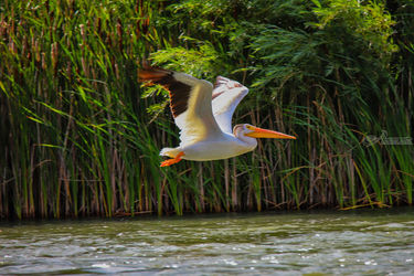 Flying Low Over The River, Architecture, Fine Art, Animals, Photography: Stretched Canvas Print, By Jim Stewart