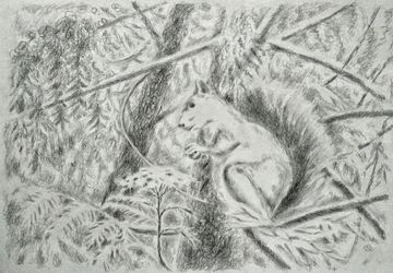 Forest squirrel, Drawings / Sketch, Fine Art, Animals, Pencil, By Tetyana K