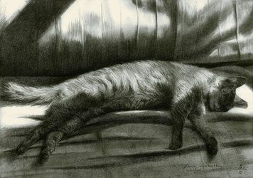 Furia sunbathing - 16-05-16<br>(sold), Drawings / Sketch, Impressionism,Photorealism,Realism, Animals,Composition,Figurative,Inspirational, Pencil, By Corne Akkers
