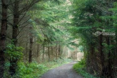 Gamble Trail, Photography, Photorealism, Landscape, Photography: Premium Print, By Mike DeCesare