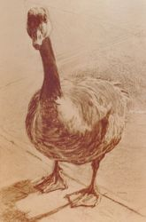 Goose, Drawings / Sketch, Fine Art, Animals, Charcoal, By James Cassel
