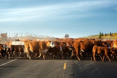 Herd Mentality, Photography, Fine Art,Photorealism, Animals,Wildlife, Photography: Premium Print, By Mike DeCesare