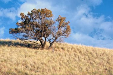 Hillside, Photography, Photorealism, Landscape, Photography: Premium Print, By Mike DeCesare