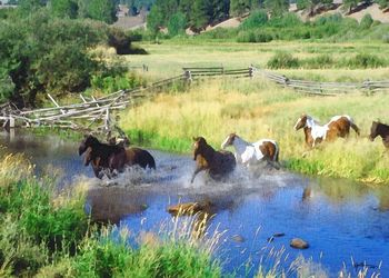 Horses running ranch