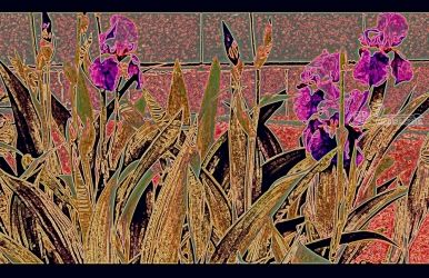 Iris Mural, Decorative Arts,Digital Art / Computer Art,Murals, Abstract,Expressionism,Fine Art,Impressionism, Botanical,Environmental art,Floral,Tropical, Digital,Photography: Stretched Canvas Print, By Diane Jansson