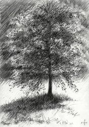 Juliana-Bernhard park at<br>Voorburg, Netherlands -<br>08-04-14, Drawings / Sketch, Abstract,Fine Art,Impressionism,Realism, Composition,Figurative,Inspirational,Landscape,Nature, Pencil, By Corne Akkers