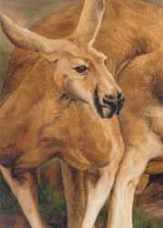 Kangaroo, Paintings, Realism, Portrait, Painting, By James Cassel