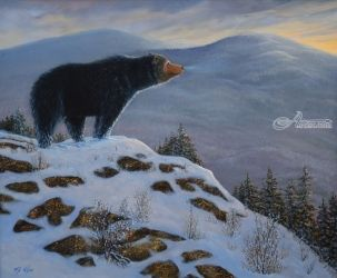 Last Look Black Bear, Paintings, Realism, Animals, Oil,Painting, By Frank Wilson