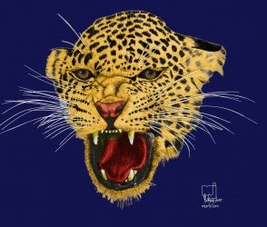 Leopard face, Digital Art / Computer Art,Drawings / Sketch,Graphic,Illustration,Poster, Fine Art,Photorealism,Realism, Animals,Environmental art,Nature,Wildlife, Digital,Pencil, By Marty Jones