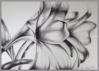 Lillies, Drawings / Sketch, Fine Art, Floral, Charcoal, By Megan Coetzee