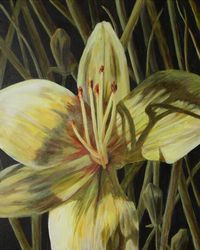 Lily Flower, Paintings, Expressionism, Botanical, Acrylic, By Jane Adrianson