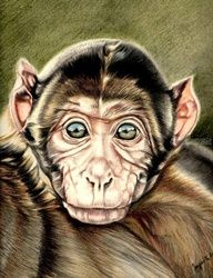 Little monky, Drawings / Sketch, Photorealism,Realism, 3-D,Animals, Pencil, By Jayanta Barman