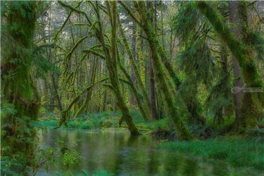 Maple Glade, Photography, Photorealism, Botanical,Landscape, Photography: Premium Print, By Mike DeCesare