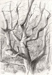 Meyendel - 09-04-14, Drawings / Sketch, Abstract,Fine Art,Impressionism,Realism, Composition,Figurative,Inspirational,Landscape,Nature, Pencil, By Corne Akkers