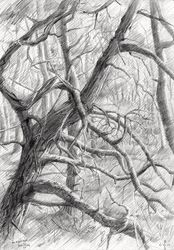 Meyendel - 20-04-14, Drawings / Sketch, Fine Art,Impressionism,Realism, Composition,Figurative,Inspirational,Landscape,Nature, Pencil, By Corne Akkers